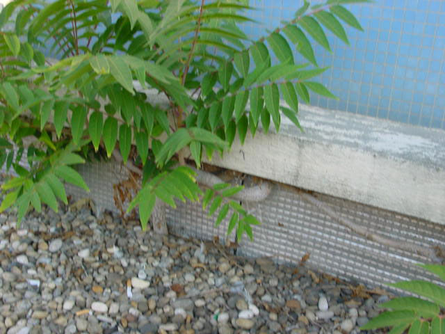 Végétation sous relevé d'étanchéité