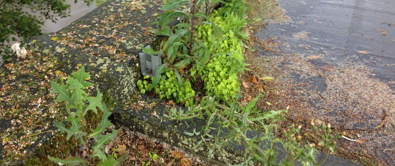 Végétation sur revêtement d'étanchéité